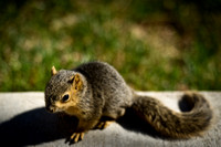 20110422-Squirrel-2505