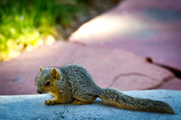 20110422-Squirrel-2498